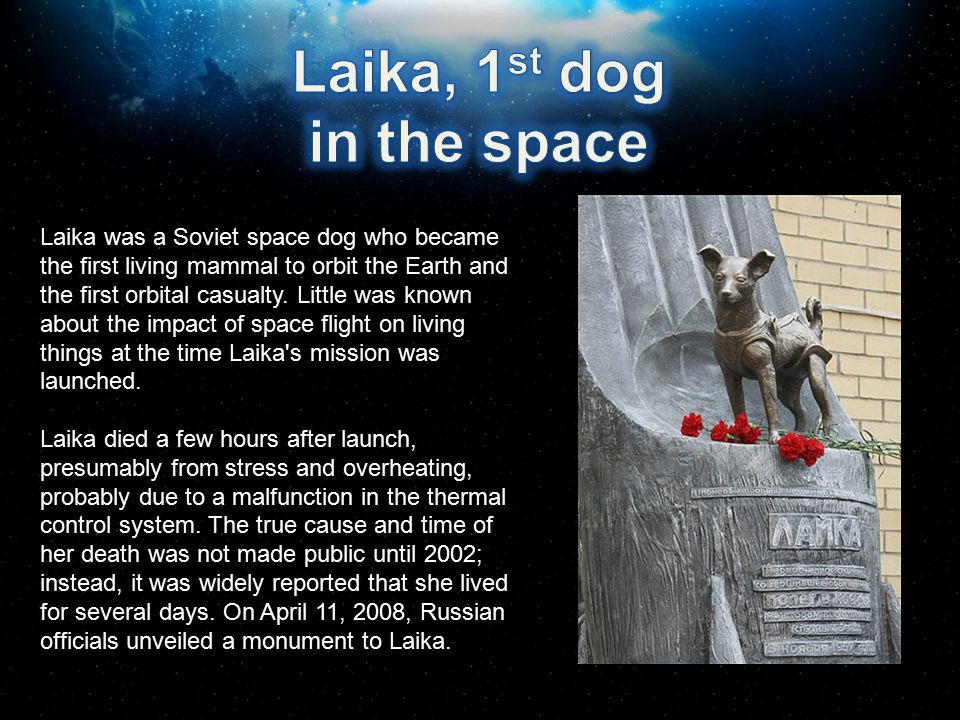 Laika, 1st dog in the space