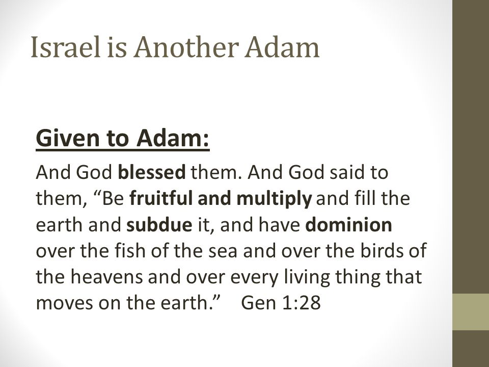 Israel is Another Adam Given to Adam: