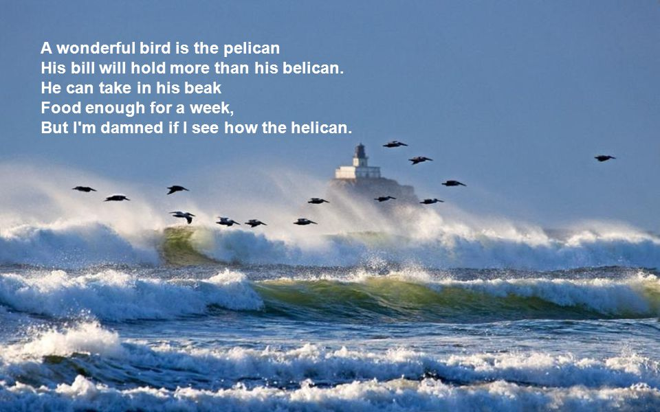 A wonderful bird is the pelican His bill will hold more than his belican.