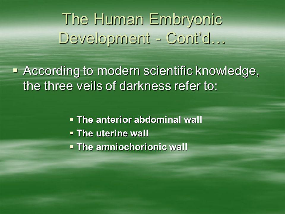 The Human Embryonic Development - Cont'd…