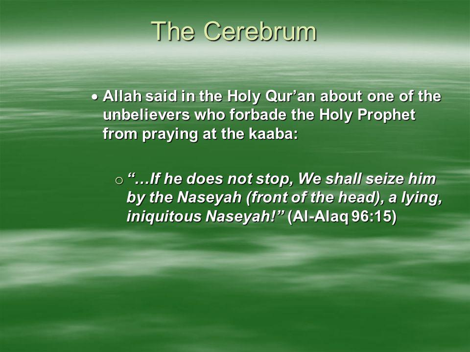 The Cerebrum Allah said in the Holy Qur'an about one of the unbelievers who forbade the Holy Prophet from praying at the kaaba: