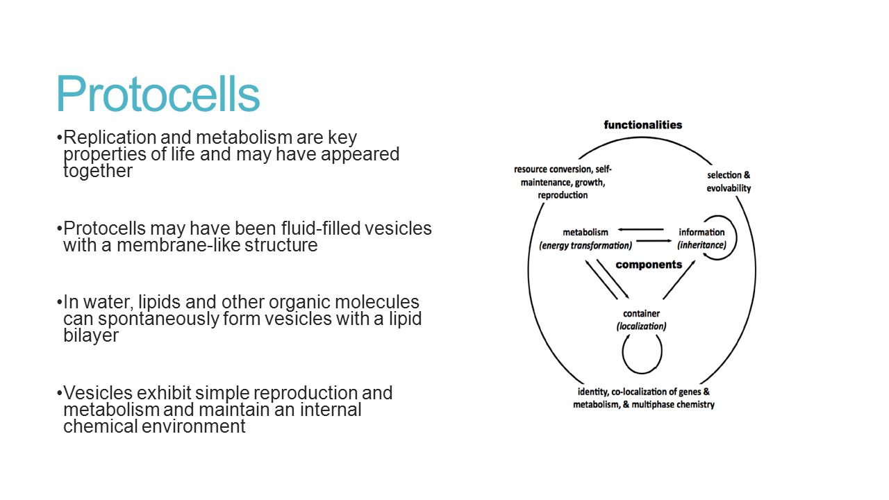 Protocells Replication and metabolism are key properties of life and may have appeared together.