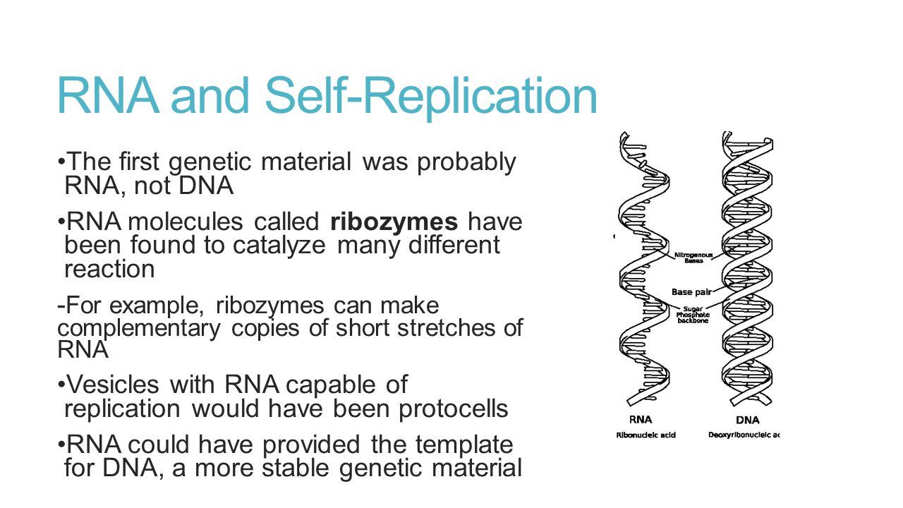 RNA and Self-Replication