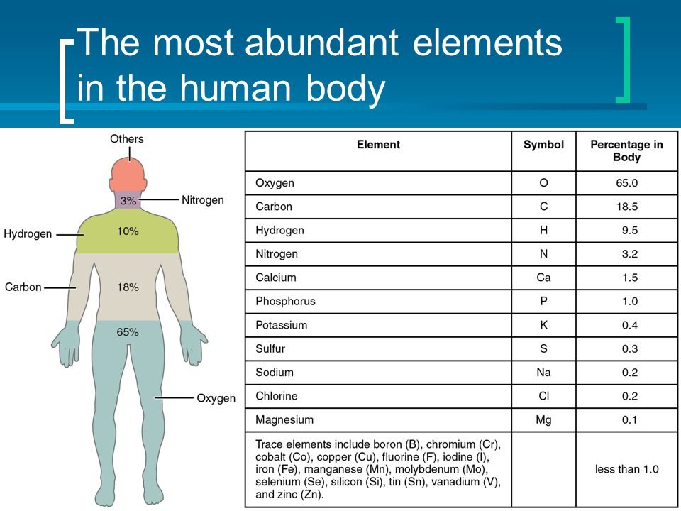 The most abundant elements in the human body