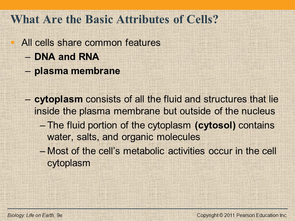 What Are the Basic Attributes of Cells