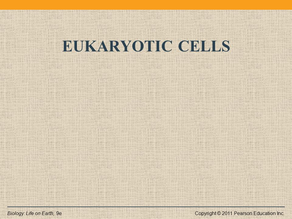 Eukaryotic cells Plants, animals, protists, and fungi