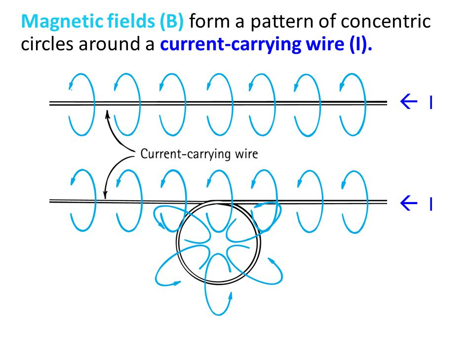 Magnetic fields (B) form a pattern of concentric circles around a current-carrying wire (I).