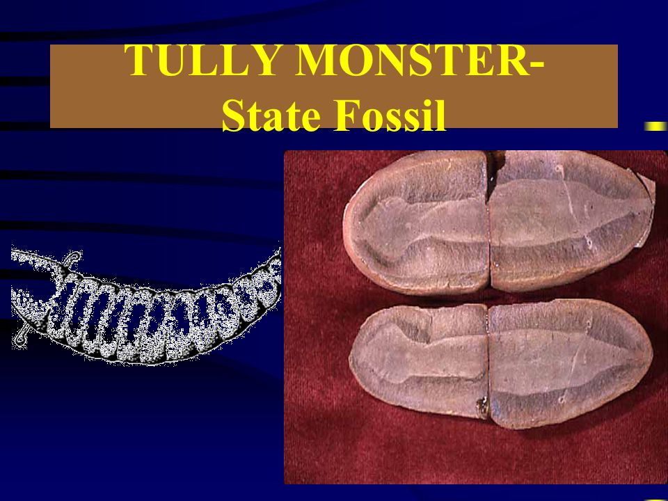 TULLY MONSTER- State Fossil
