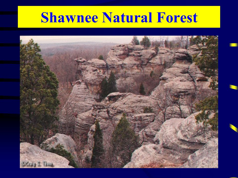 Shawnee Natural Forest