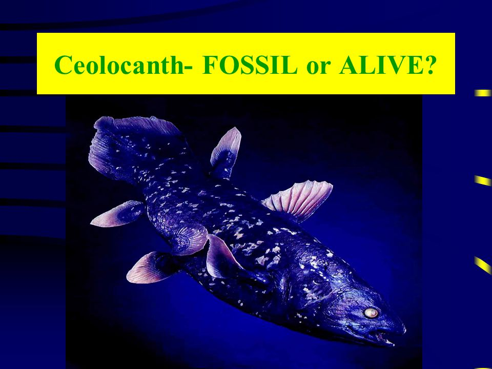Ceolocanth- FOSSIL or ALIVE