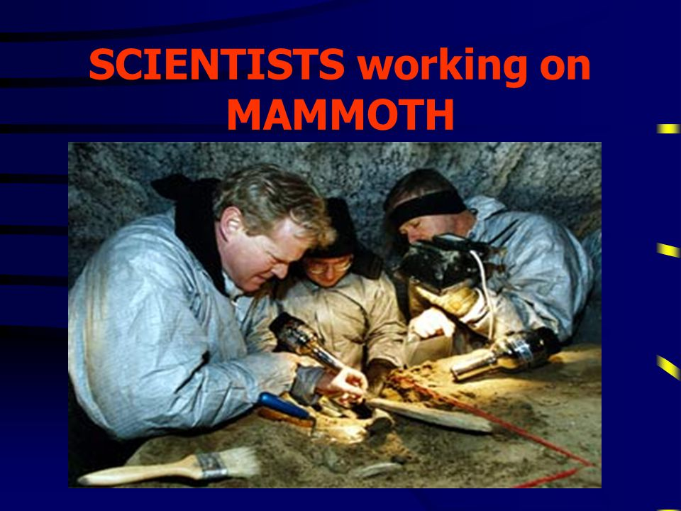 SCIENTISTS working on MAMMOTH