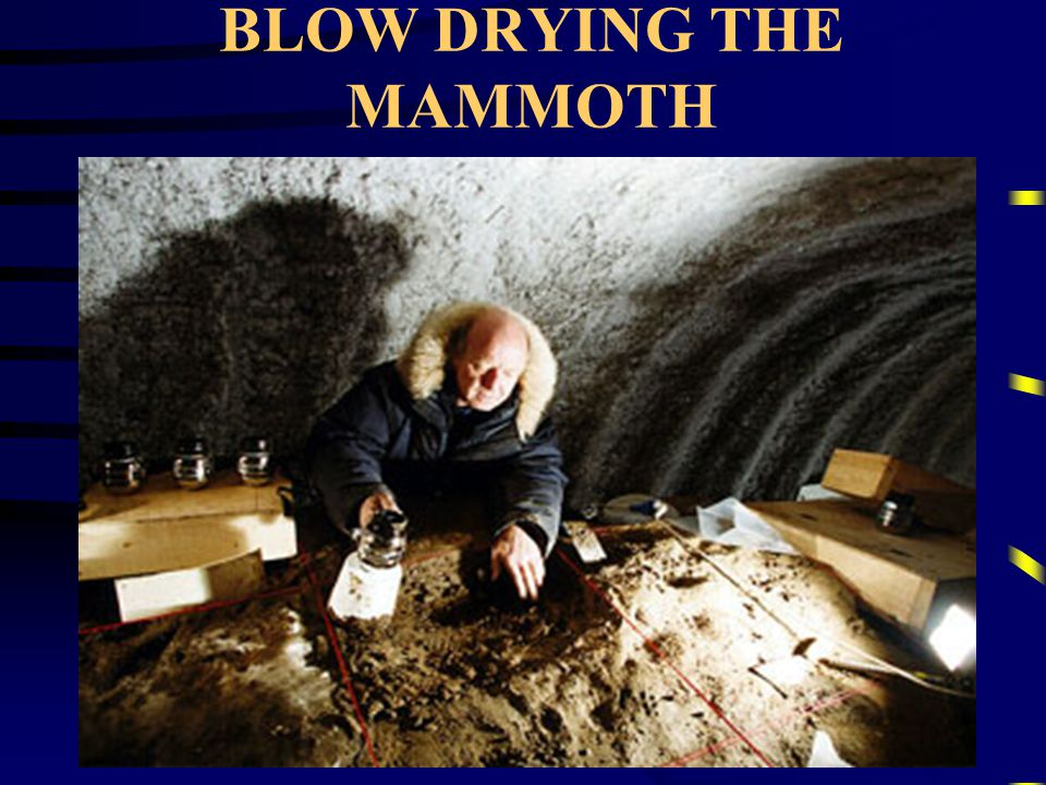 BLOW DRYING THE MAMMOTH
