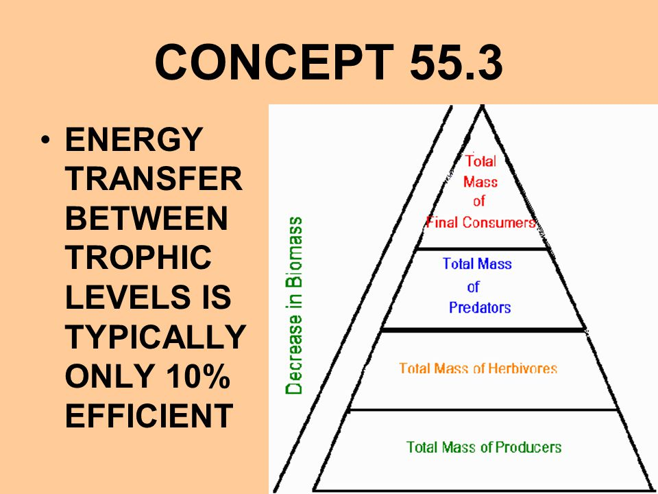 CONCEPT 55.3 ENERGY TRANSFER BETWEEN TROPHIC LEVELS IS TYPICALLY ONLY 10% EFFICIENT