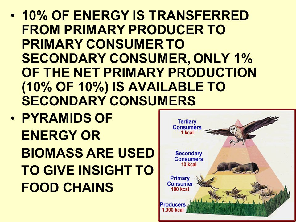 10% OF ENERGY IS TRANSFERRED FROM PRIMARY PRODUCER TO PRIMARY CONSUMER TO SECONDARY CONSUMER, ONLY 1% OF THE NET PRIMARY PRODUCTION (10% OF 10%) IS AVAILABLE TO SECONDARY CONSUMERS