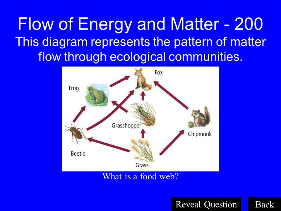 Flow of Energy and Matter - 200 This diagram represents the pattern of matter flow through ecological communities.