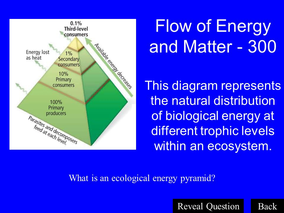 What is an ecological energy pyramid