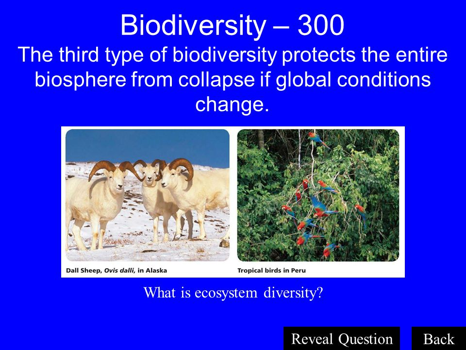 What is ecosystem diversity