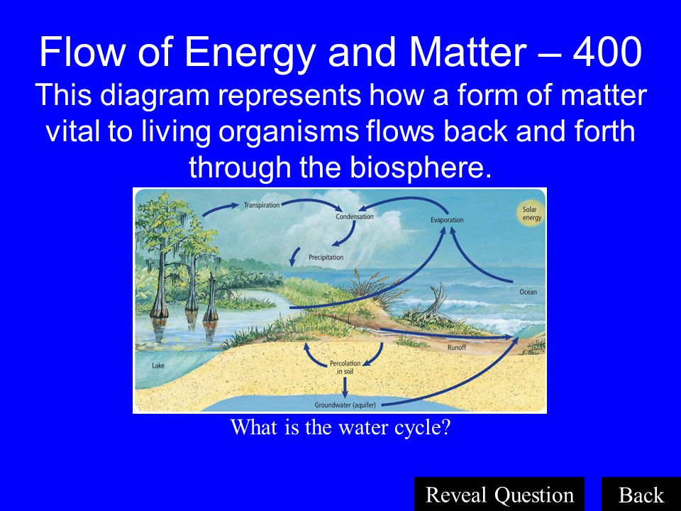 Flow of Energy and Matter – 400 This diagram represents how a form of matter vital to living organisms flows back and forth through the biosphere.