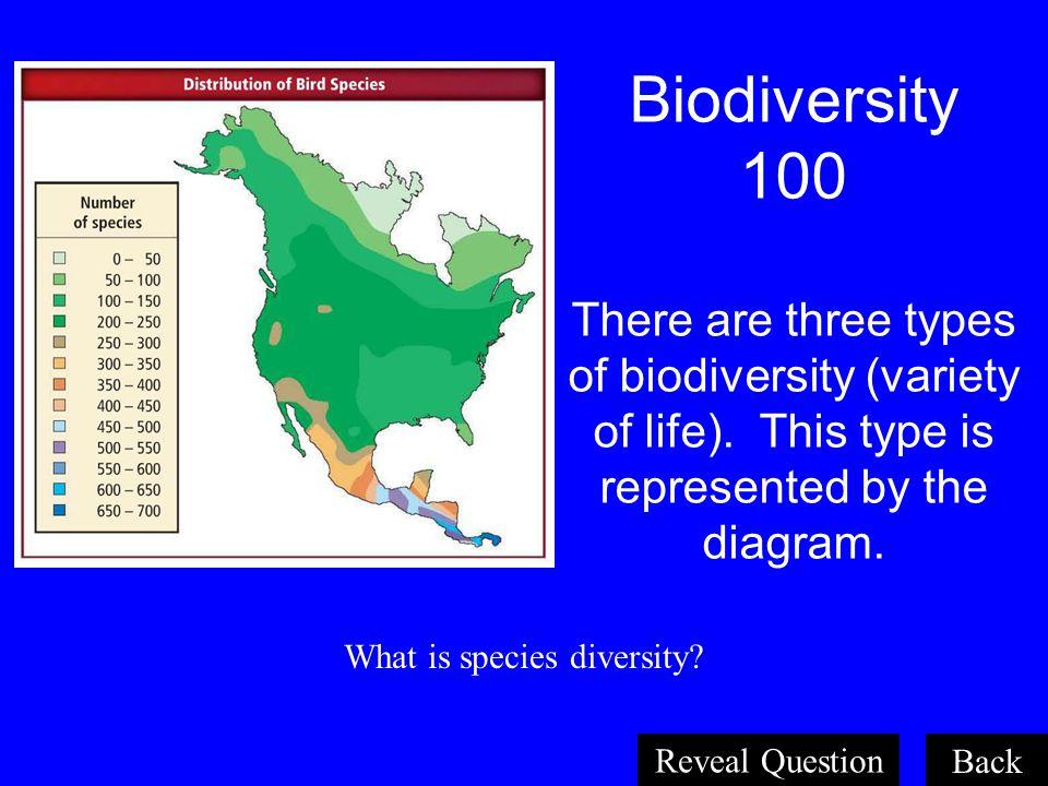 What is species diversity