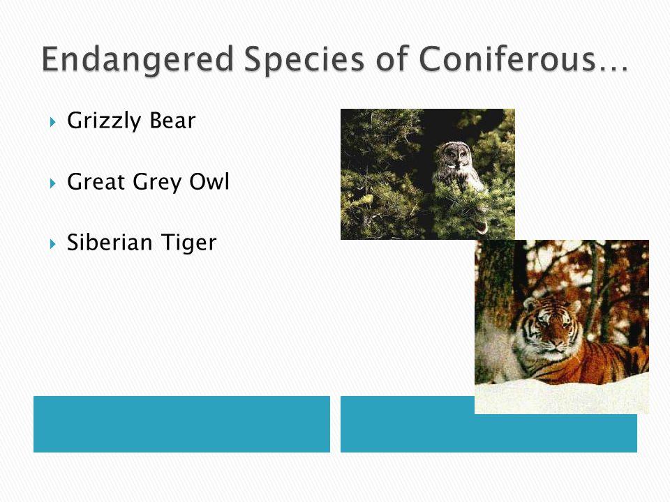 Endangered Species of Coniferous…