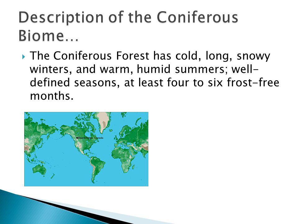 Description of the Coniferous Biome…