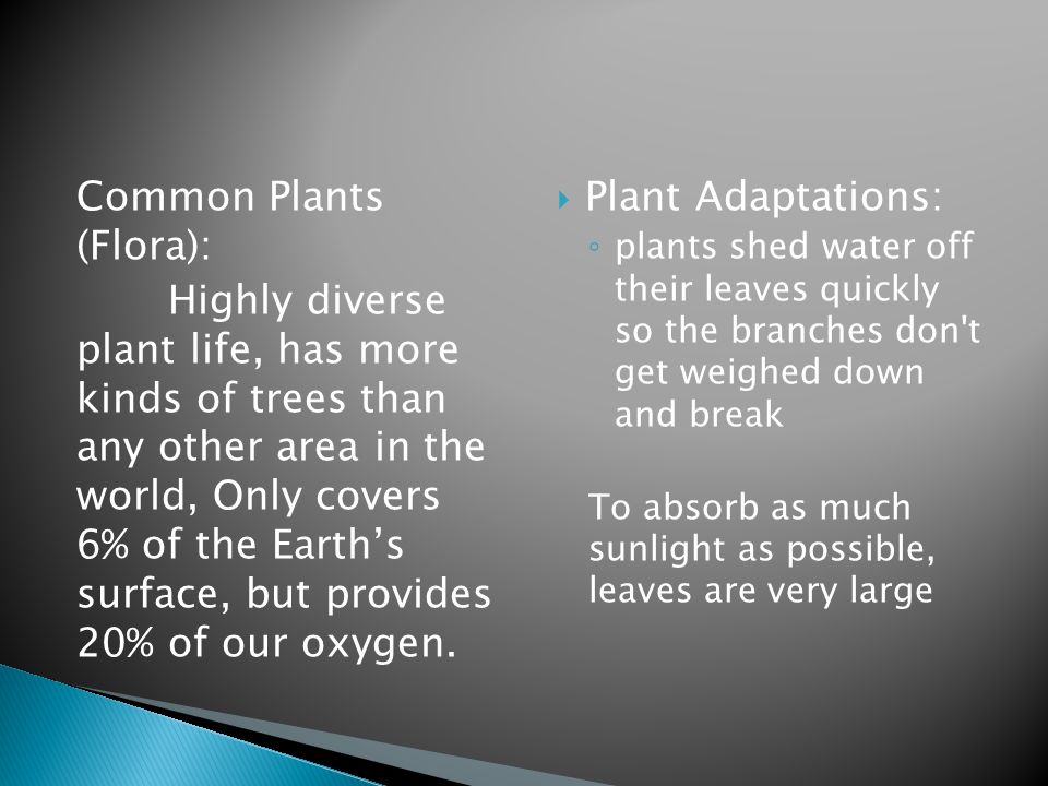 Common Plants (Flora): Highly diverse plant life, has more kinds of trees than any other area in the world, Only covers 6% of the Earth's surface, but provides 20% of our oxygen.