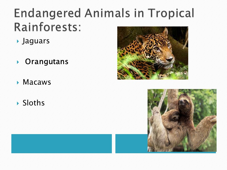 Endangered Animals in Tropical Rainforests: