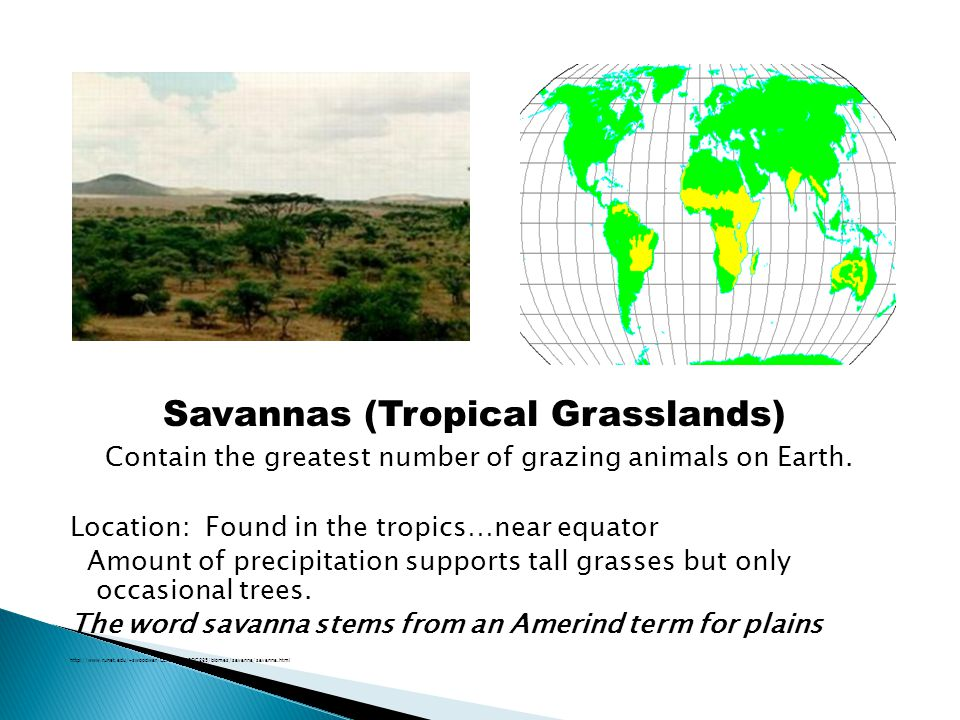 Savannas (Tropical Grasslands)