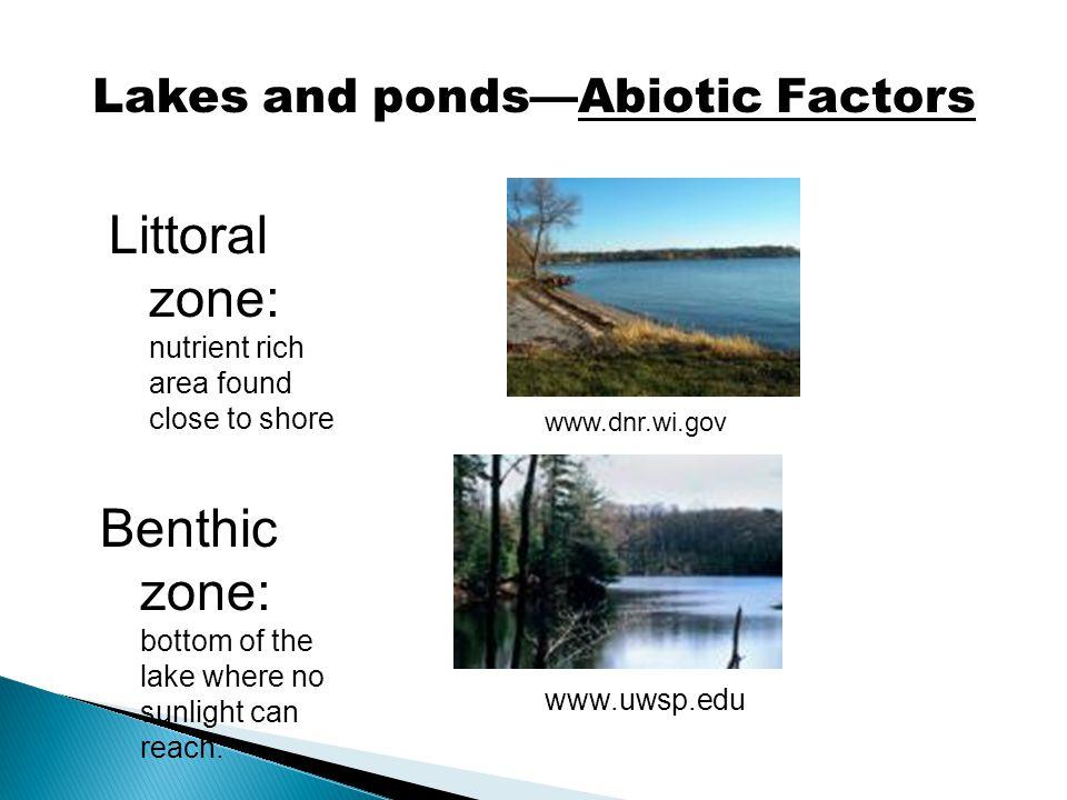 Lakes and ponds—Abiotic Factors
