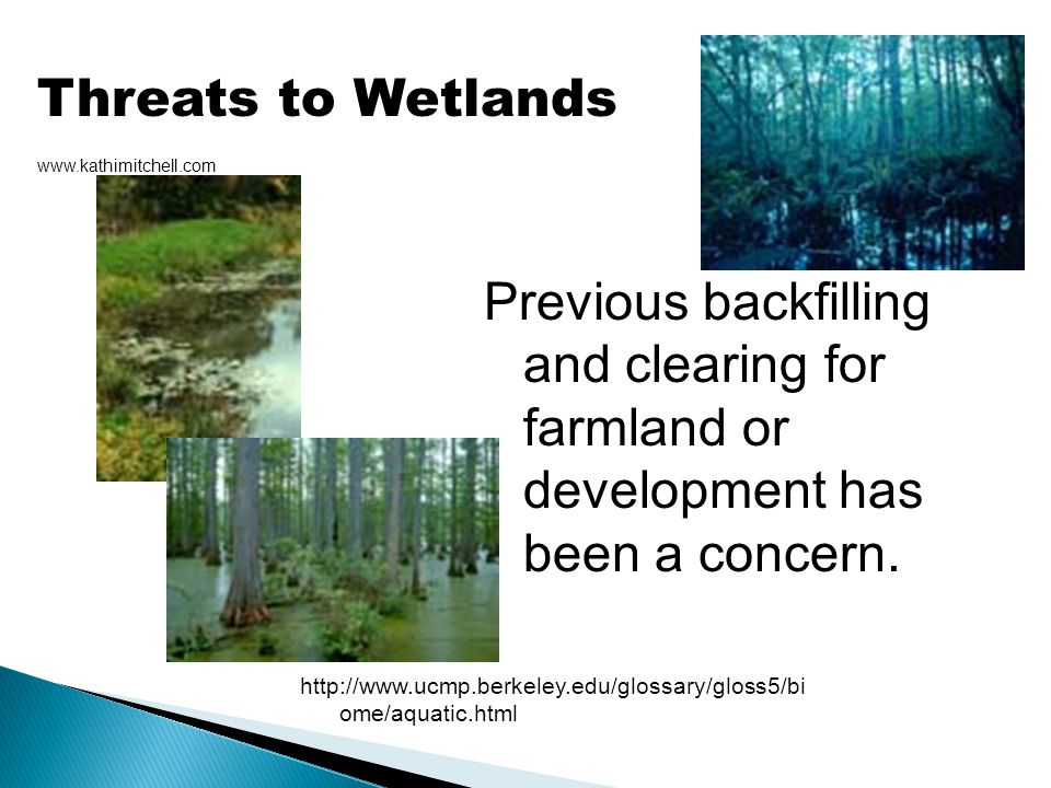 Threats to Wetlands www.kathimitchell.com. Previous backfilling and clearing for farmland or development has been a concern.