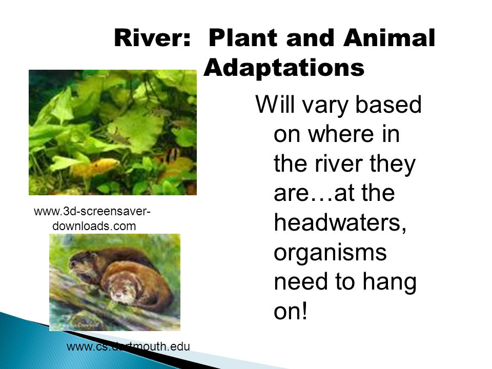 River: Plant and Animal Adaptations