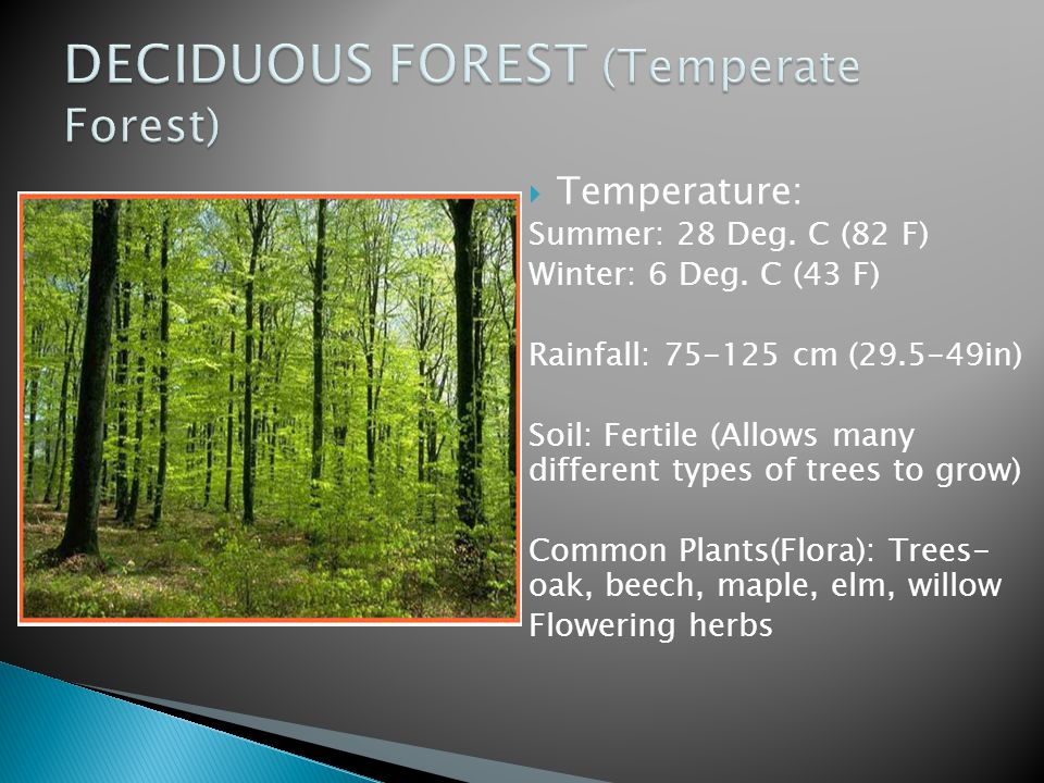 DECIDUOUS FOREST (Temperate Forest)