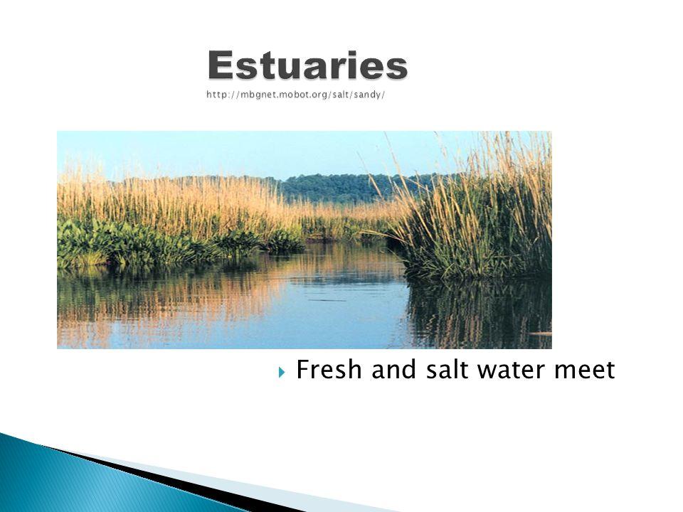 Estuaries http://mbgnet.mobot.org/salt/sandy/