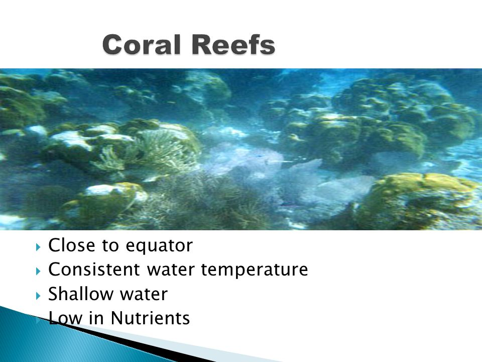 Coral Reefs Close to equator Consistent water temperature