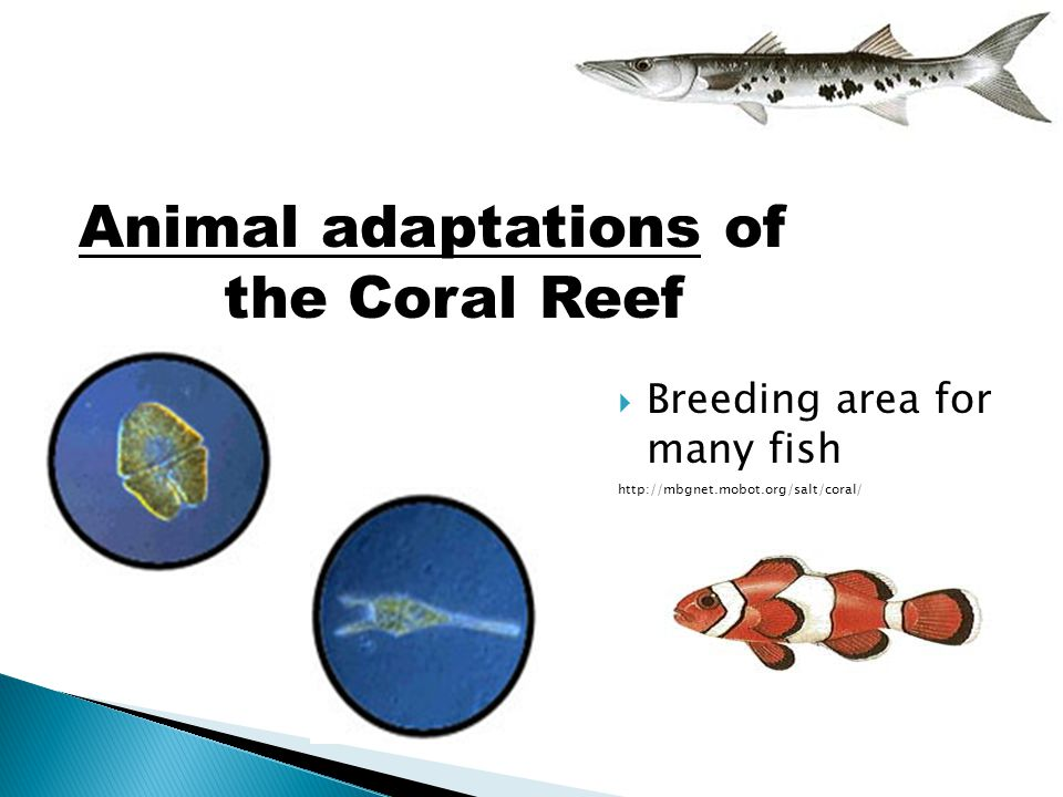 Animal adaptations of the Coral Reef