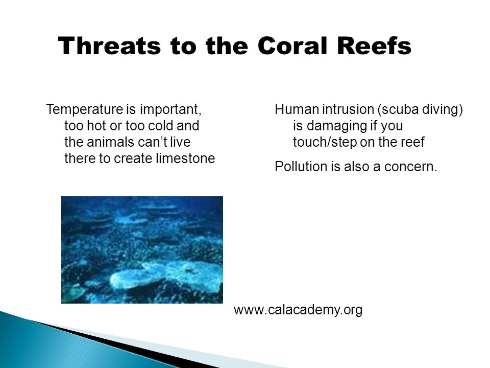Threats to the Coral Reefs