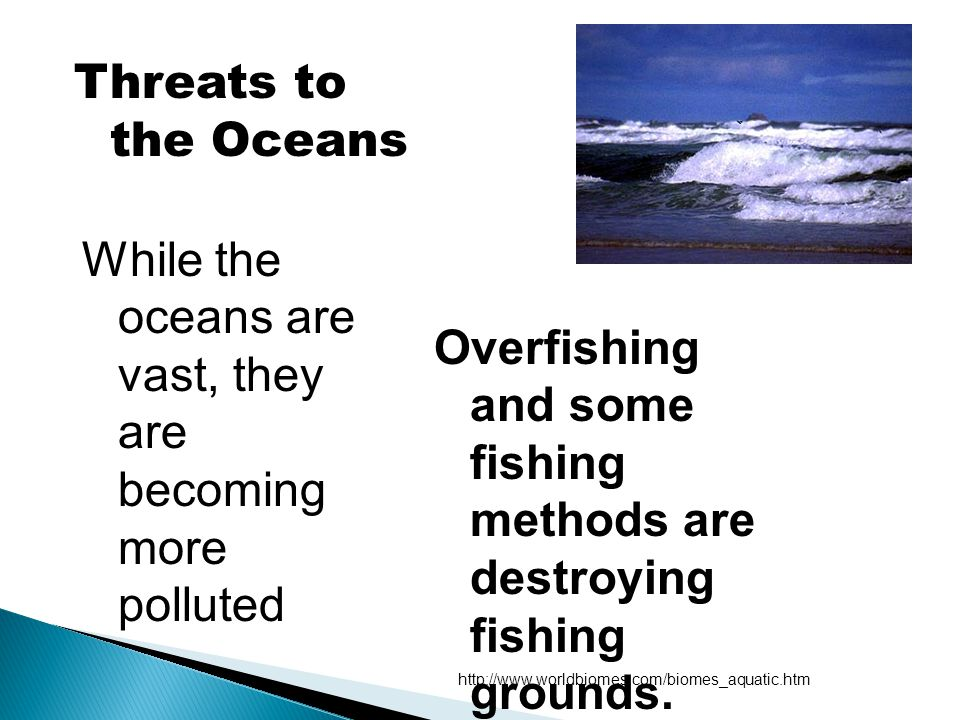 While the oceans are vast, they are becoming more polluted