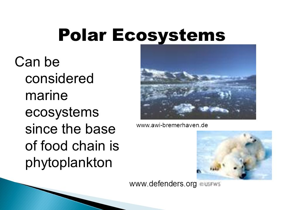 Polar Ecosystems Can be considered marine ecosystems since the base of food chain is phytoplankton.