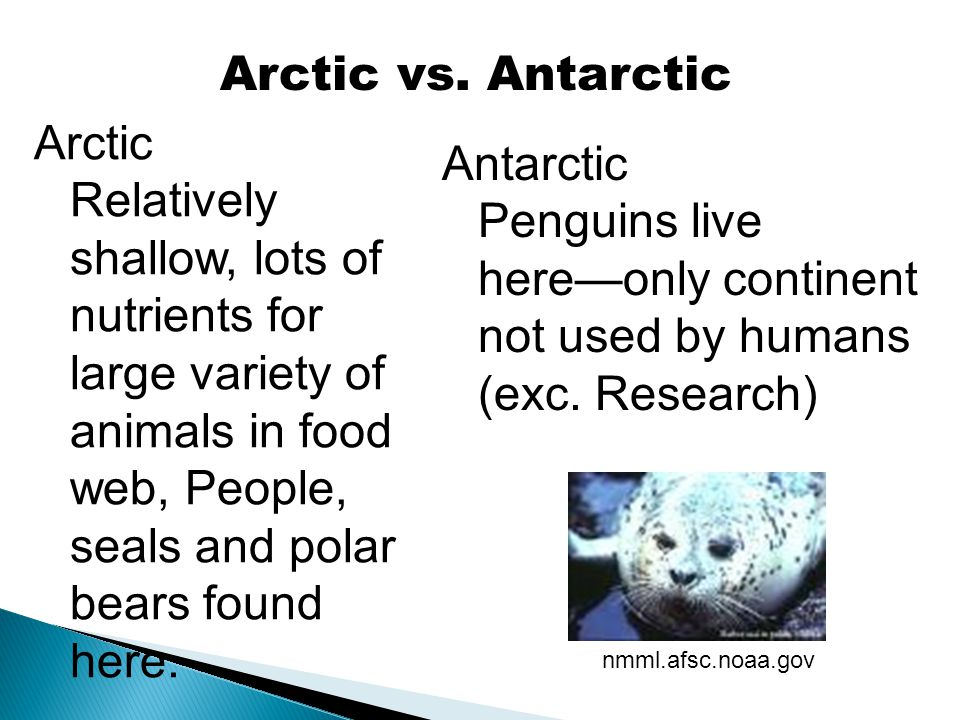 Arctic vs. Antarctic Arctic Relatively shallow, lots of nutrients for large variety of animals in food web, People, seals and polar bears found here.