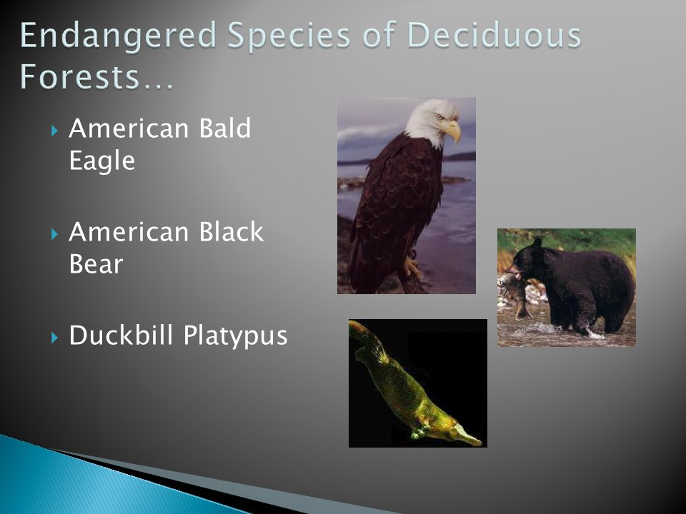 Endangered Species of Deciduous Forests…