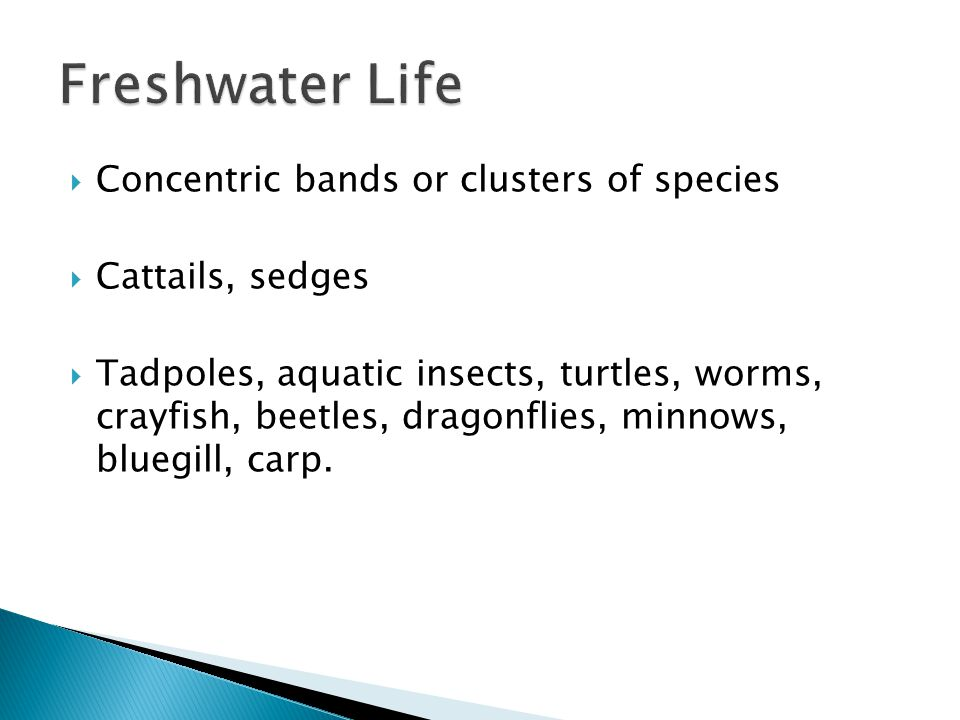 Freshwater Life Concentric bands or clusters of species