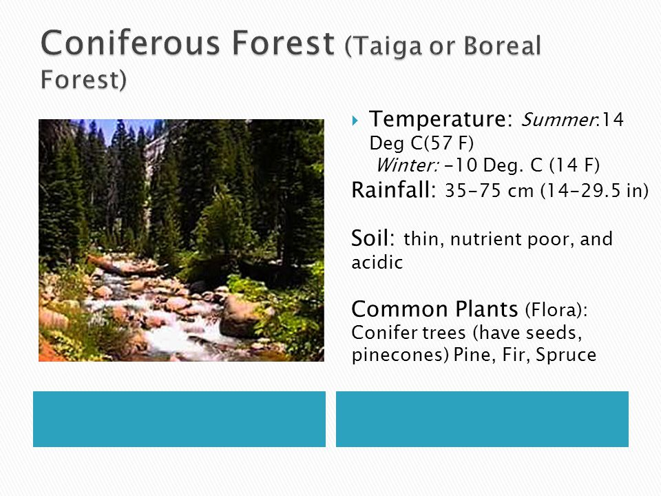 Coniferous Forest (Taiga or Boreal Forest)