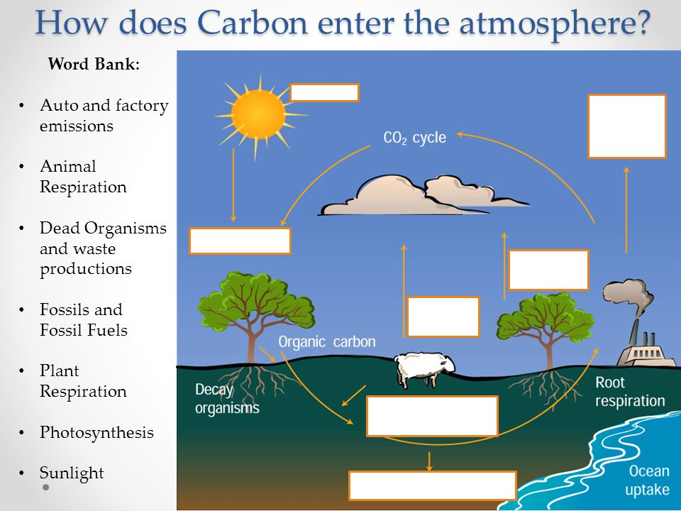 How does Carbon enter the atmosphere