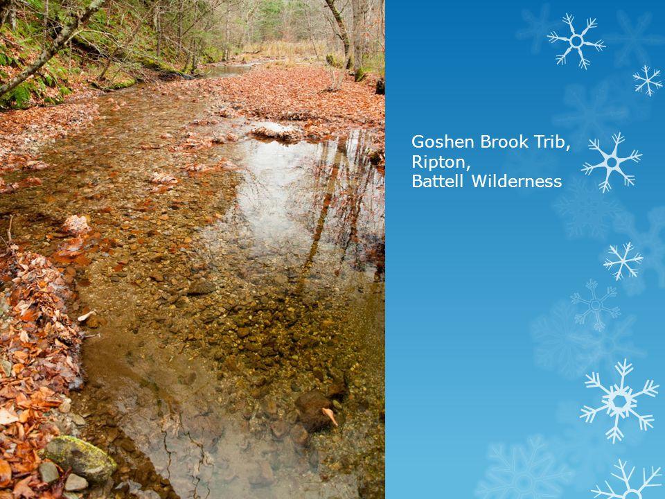 Goshen Brook Trib, Ripton,