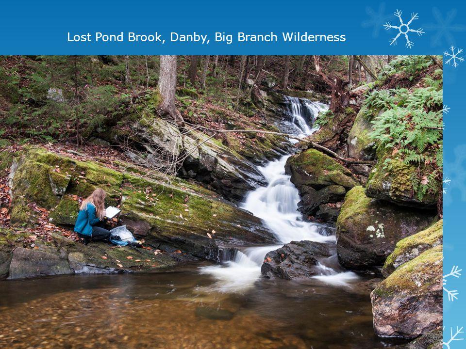 Lost Pond Brook, Danby, Big Branch Wilderness