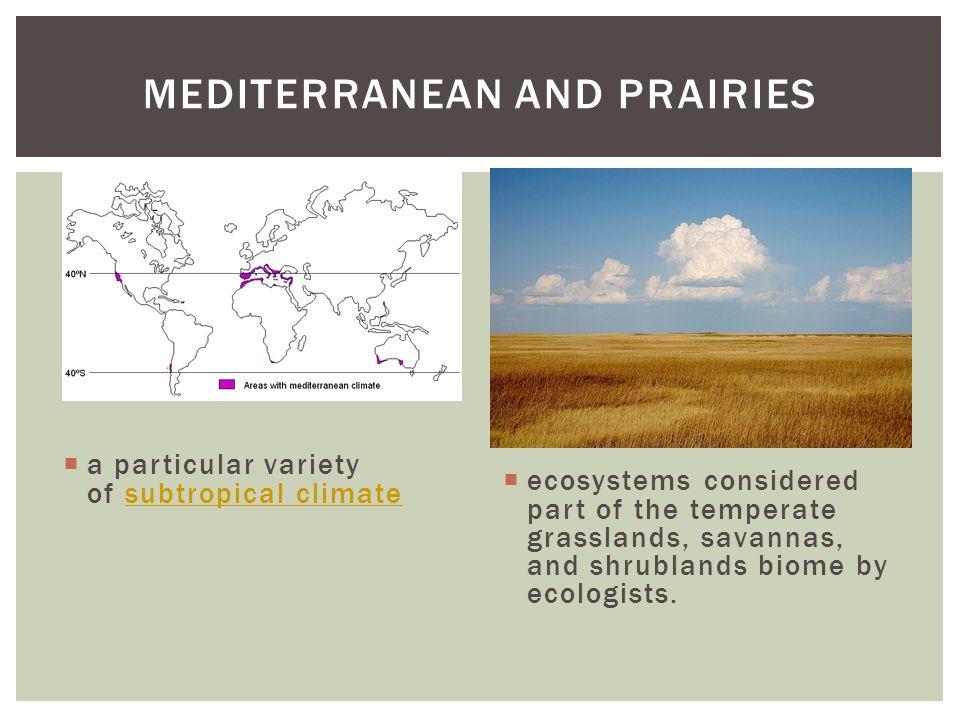 Mediterranean and Prairies