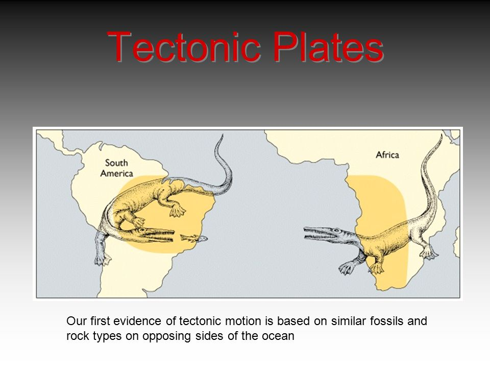 Tectonic Plates Our first evidence of tectonic motion is based on similar fossils and.