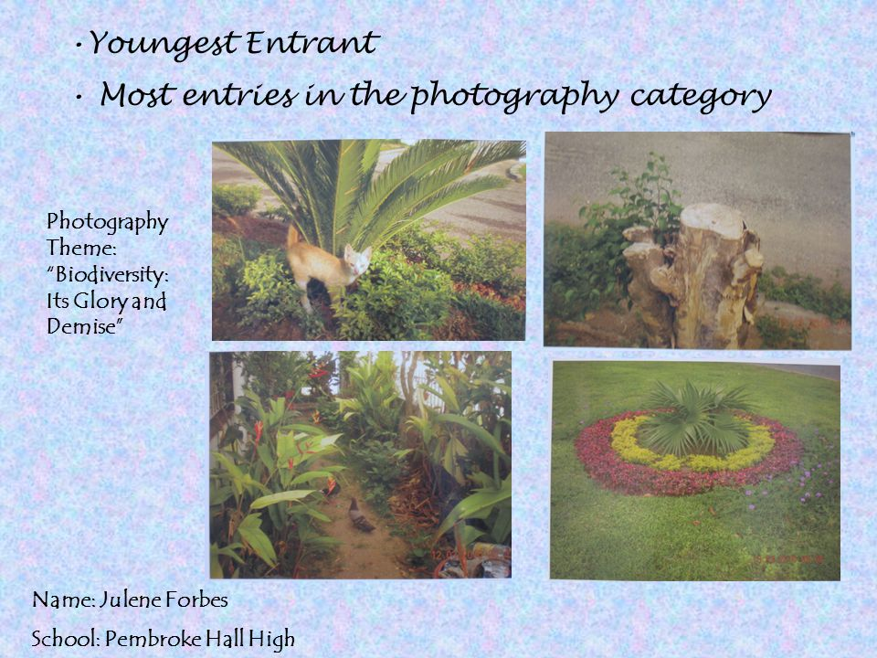 Most entries in the photography category