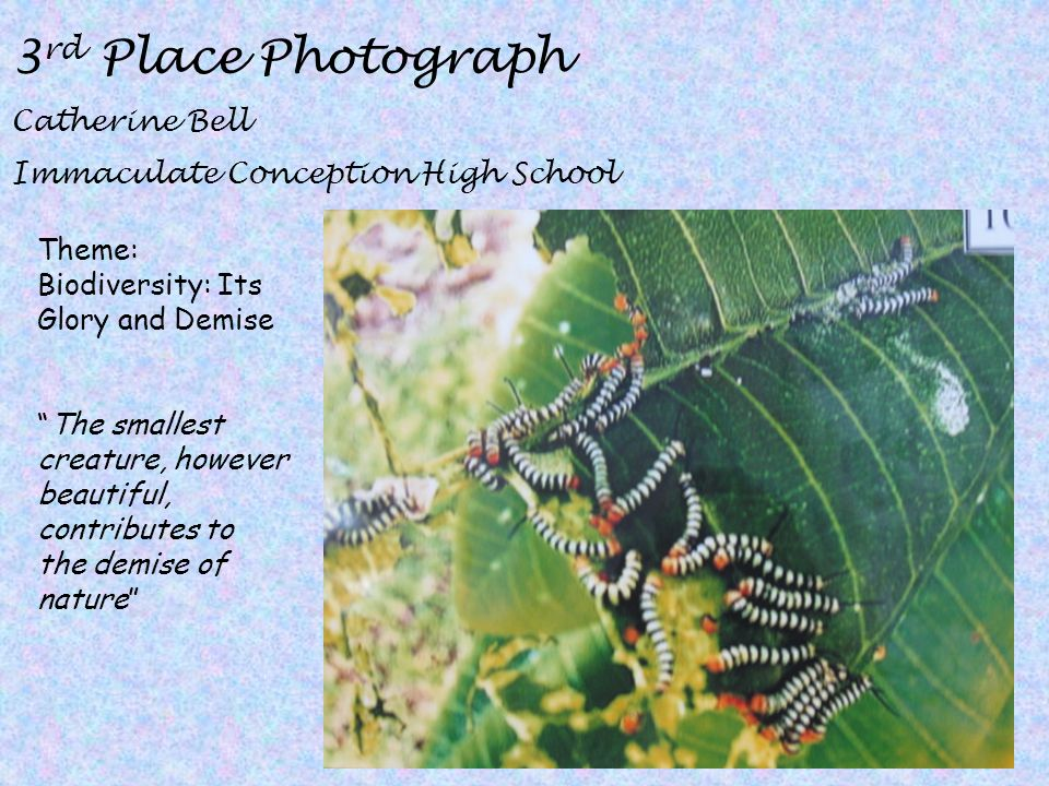 3rd Place Photograph Catherine Bell Immaculate Conception High School