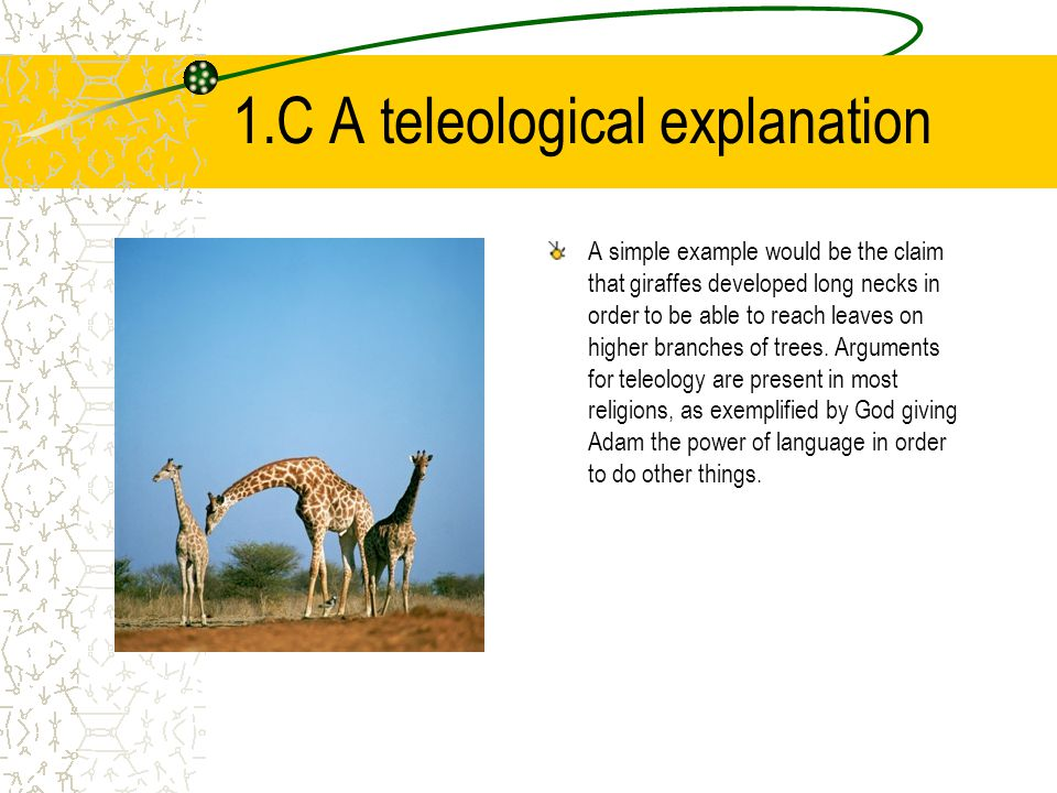 1.C A teleological explanation